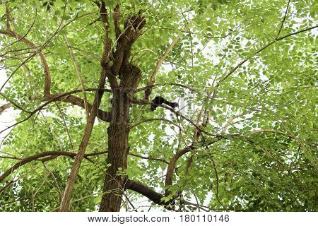 Squirrels jumping in the trees And have fun When I see a sense of independence that does not have to be in the slammer.