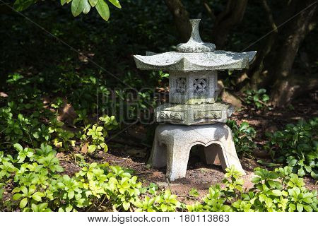 stone lantern in shadow between evergreen ground cover plants pachysandra garden landscape design in Japanese style