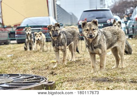 City homeless mongrel puppies looking at the camera