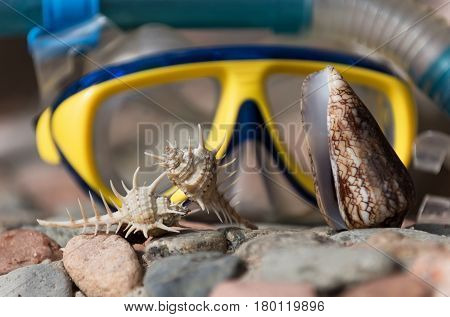thorn and cone conchs marine shells or seashells sea snails on grey and red stones rocky surface on sunny day on blurred blue and yellow diving mask background. Idyllic summer vacation treasure