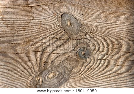 Brown wooden board with knots woody stem organic material with natural wood texture as timber background