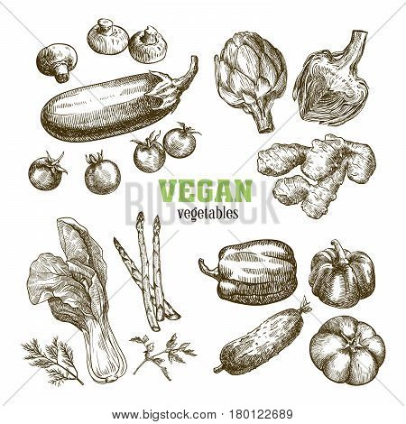 Set of vegetables. Harvesting. Hand drawn vector sketches on a white background