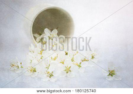 Cherry Plum blossoms macro shot with texture overlay