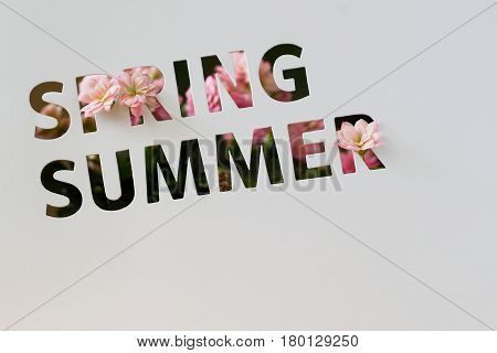 Perforated text on paper card, cutting style with words of Spring and Summer and decorated pink flowers. Modern background for promotion Retail profile, discount, Seasonal events