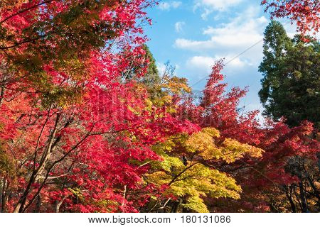 Eikando temple at peak autumn foliage colors in Kyoto Japan.