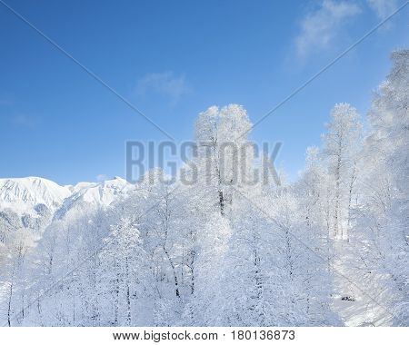 Trees in the snow. The beautiful landscape in the mountains at Krasnaya Polyana