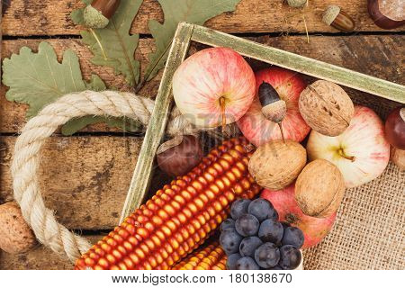 Thanksgiving day: Tray with different ripe vegetables inside copy space
