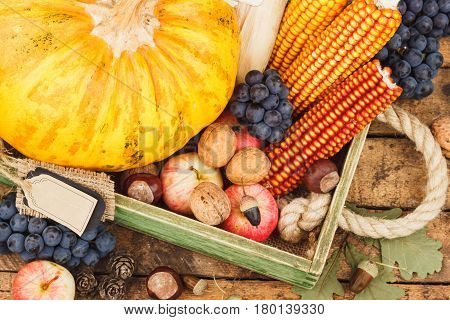 Thanksgiving day: Tray with pumpkin and different ripe vegetables inside