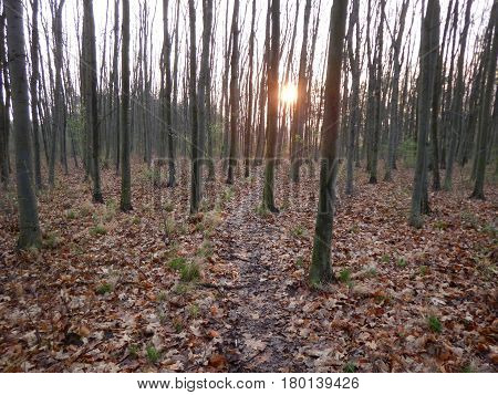 Beautiful Sunrise In A Leafless Forest