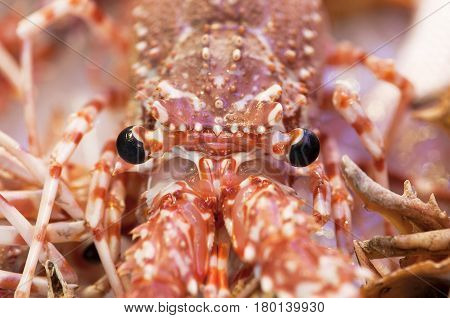 a macro shot of lobster glance in a fish store