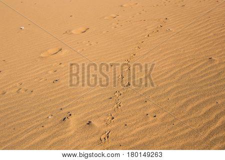 Dog print on sand. Dog footprints on the beach