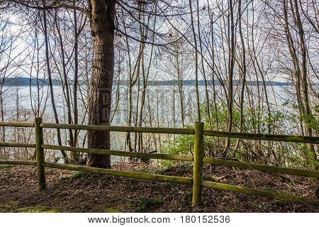 Trees grow in front of a fence at Dash Point State Park in Dash Point Washington in Spring.