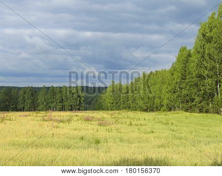 Summer landscape in cloudy weather with a view of the field forest and sky in the clouds