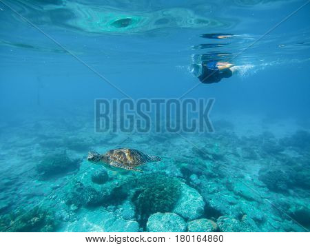 Person snorkeling with sea turtle undersea photo. Green turtle with swimming woman in full face mask and snorkeling wear. Exotic marine animal. Tropical vacation sport activity. Sea tortoise in nature