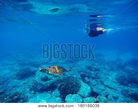 Snorkeling woman with sea turtle underwater photo. Green turtle with swimming woman in full face mask and snorkeling wear. Exotic sea animal. Tropical vacation sport activity. Sea tortoise in nature