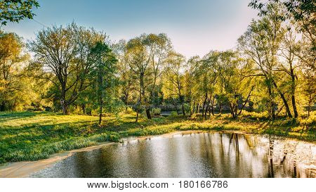 Sun Shining Over Landscape Of Summer Sunny Forest Woods And Wild Bog Nature. Blue Sky. Belarus, Russia. Landscape In Sunny Day. Nobody. Deciduous Forest Nature