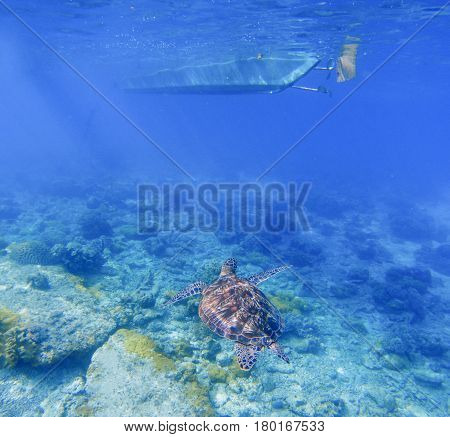 Sea turtle under boat. Tortoise swims underwater in blue tropical sea. Green turtle in natural environment. Snorkeling in shallow water of tropic lagoon. Exotic island seashore marine animal photo