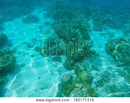 Sea animals and plants. Oceanic environment underwater photo. Shallow waters seaweed and coral reef formation. Undersea scenery with corals and fishes. Exotic wild nature. Tropical sea lagoon image