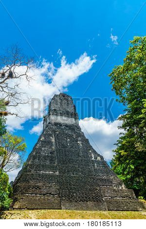 Maya pyramid in the rainforest by Tikal in Guatemala