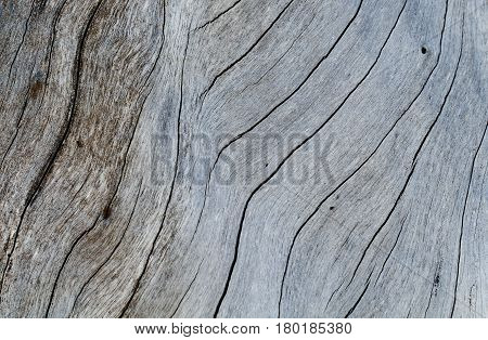 Shabby wooden texture close-up photo. Cold grey wood background. White old tree near the sea. Curves and cracks on rustic timber. Rough timber texture. Sea wood backdrop. Grey weathered tree surface