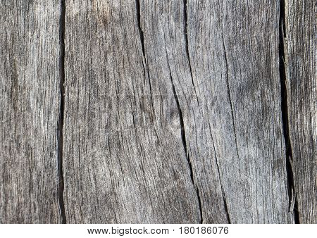 Rustic wooden texture closeup photo. Cold grey wood background. White old tree near the sea. Curves and cracks on rustic timber. Rough timber texture. Sea wood backdrop. Grey weathered tree surface