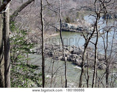 The trees on a coast of the Potomac River near Washington USA March 20 2017