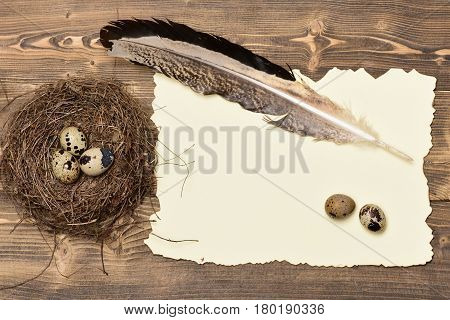 Quail Eggs In Nest With Writing Feather And Paper, Easter