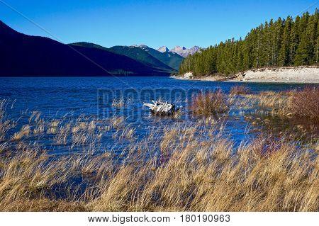 Marshy shore of mountain lake in Kananaskis, Alberta
