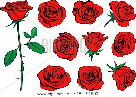 Red roses hand drawn color set. Black line rose flowers inflorescence silhouettes isolated on white background. Icon collection. Vector doodle illustration