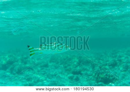 Underwater Shot Fishes In Deep Tropical Sea