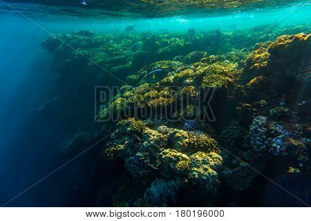 Red Sea Coral Reef With Hard Corals, Fishes Underwater Photo