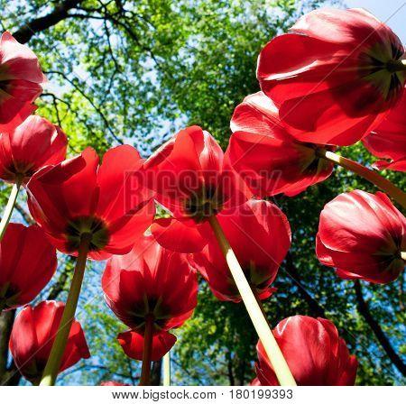 Vivid Meadow Colorful Garden