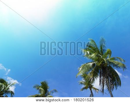 Green coco palm leaves on blue sky background. Palm tree and blue sky photo with sun flare. Tropical paradise banner template. Beautiful tropic island in sunny weather. Exotic island holiday travel
