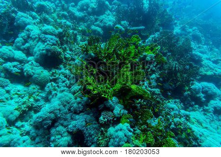 Sea Under Water Nature, With Reaf Coral And Fishes. Sea Flora And Fauna.