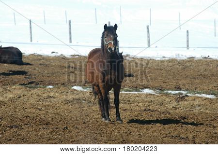 horse looking  snow standing  fence post snow hay