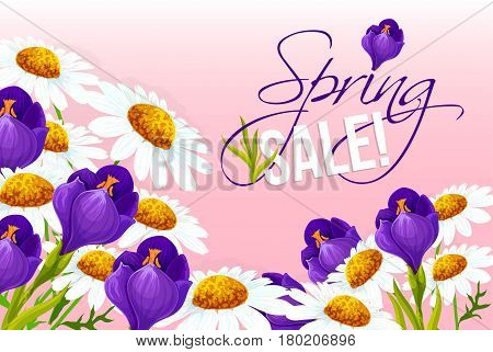 Spring Sale vector poster with flowers. Springtime holiday shopping promo discount offer design template of blooming spring chamomile or daisy and blue crocuses blossoms