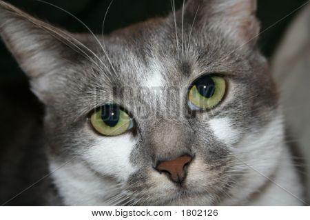 Cute Cat Face Close Up
