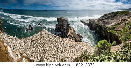 Incredible rugged coastline with waves crashing and gannets flying around