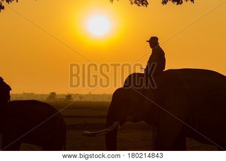 THAI ELEPHANT Silhouette elephant and mahout in Surin Province Thailand.