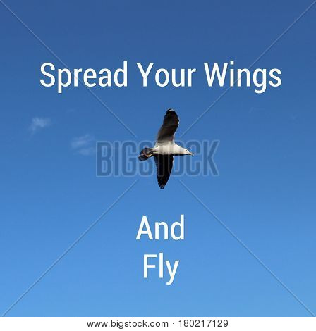 Conceptual image with inspirational text on clear blue sky with bird in flight. Spread your wings and fly.