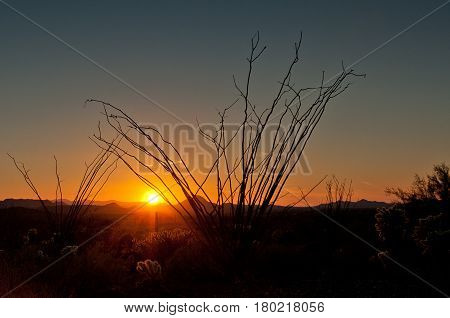 A beautiful Arizona sunset with ocotillo silhouette and cloud