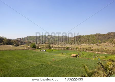 wheat fields and straw huts in scenic morni hills chandigarh india with acacia woodland under a clear blue sky