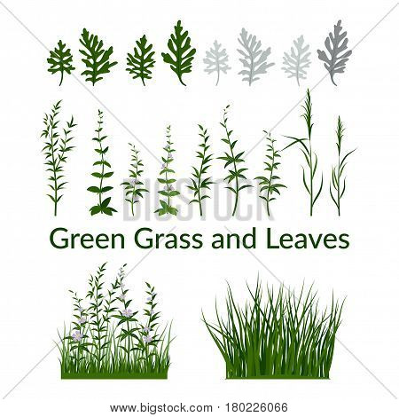 Set of Summer and Spring Landscape Elements, Green Grass, Lilac Flowers and Leaves, Isolated on White Background. Vector