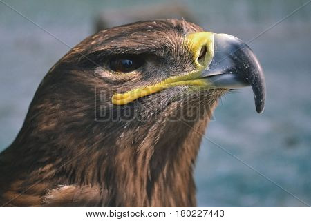 Hawk is similar to the Eagle. The birds of prey as well. But the Hawks are smaller. Is there a hooked beak high and have very good eyesight closeup