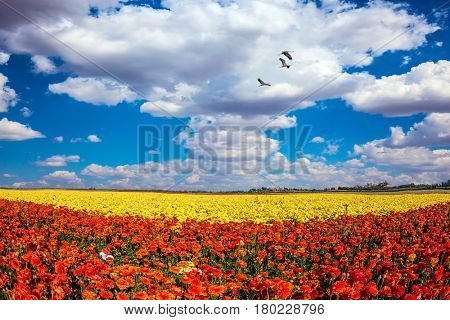 The southern sun illuminates the flower fields of red and yellow buttercups. Migratory birds flying high in the cumulus clouds. Concept of rural tourism