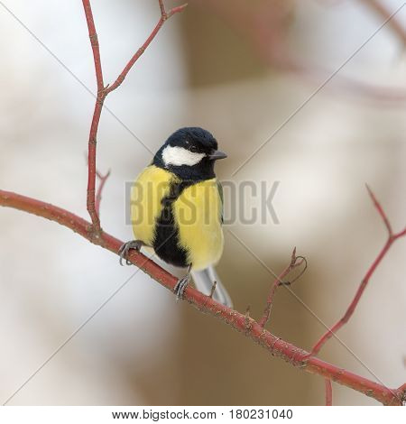 Portrait of a titmouse on a branch