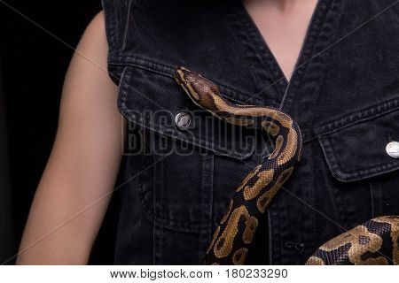 Woman with royal python on black background
