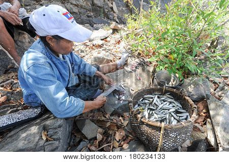 Woman Cleaning Fishs At Don Khon Island On Laos