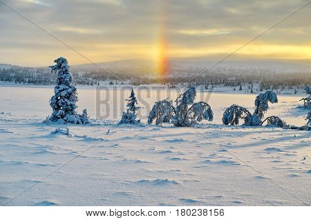 Fir-tree and pines heavily covered with fresh snow on background sunrise the sun and mountains. Miracle nature. Subpolar Urals, Russia