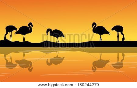 At riverbank with silhouette flamingo scenery vector illustration